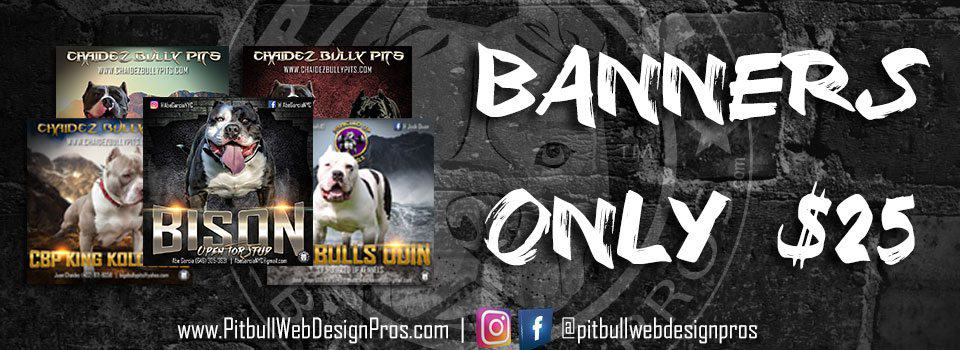 pitbullwebdesign_banners25