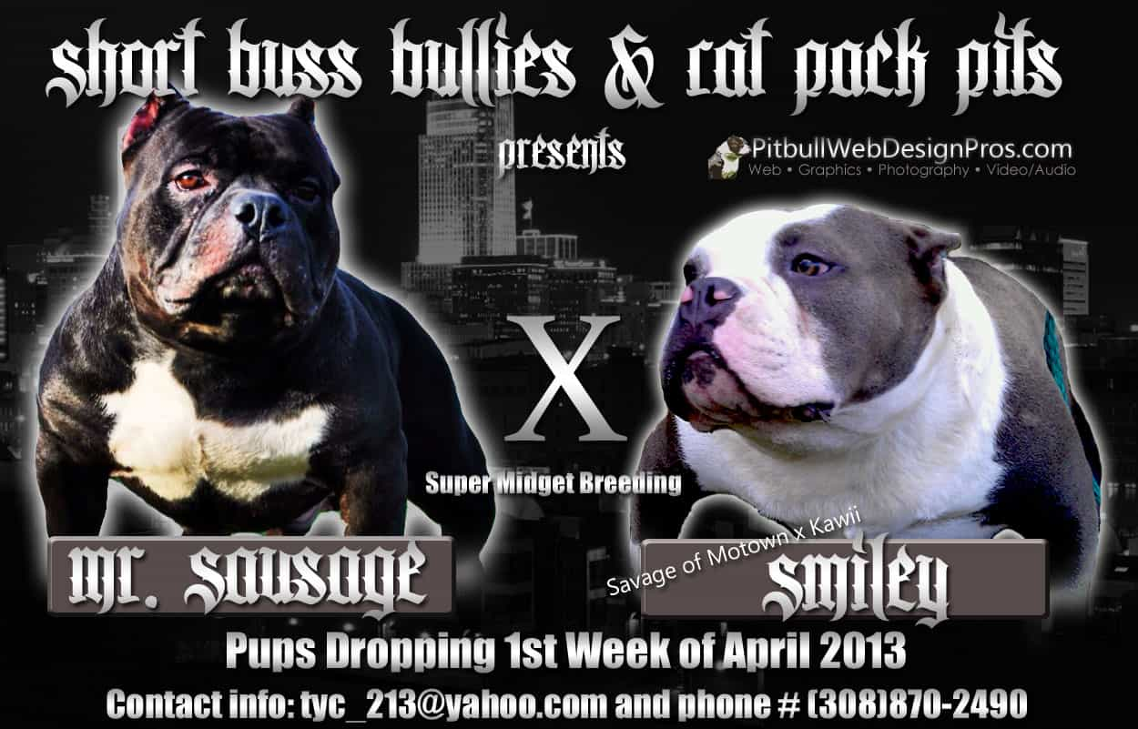 Rat Pack Pits - Pitbull Breeding Banner Design